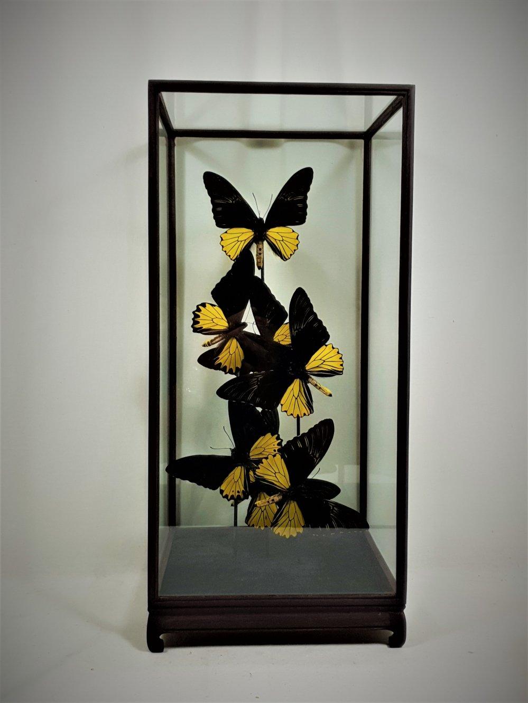 Uitgelezene Stolpen   Vlinderwereld NM-01